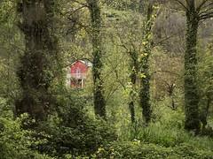 House in the bush (Ramy.) Tags: trees red espaa house green de four cuatro lumix spain bush barco o panasonic galicia micro espagne thirds ourense m43 tercios dmcgx7 vadeorras