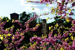 Borgo Medievale (lara_etta) Tags: pink italy flower castle nature composition contrast landscape torino nikon italia dream rosa natura fiori turin castello paesaggio citt medioevo d3200