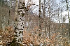 Peruica Primeval Forest during winter in Sutjeska National Park, Bosnia & Herzegovina (Terekhova) Tags: wood trees winter snow forest bosnia primeval