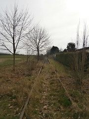 Reste Gterstrecke Teltow 2016 - 31 (Abandoned-Stillgelegt Berlin) Tags: railroad trees tree abandoned train germany deutschland bush track tracks railway bushes bume brandenburg baum gleise busch ballast gleis bahnstrecke stillgelegt trackbed teltow bahndamm schotter schwellen bsche b landbrandenburg betonschwellen bahnbergnge holzschwellen betonschwelle holzschwelle altebahnstrecke gterstrecke stadtteltow ehemaligegterstrecke ehemaligebahnstrecke