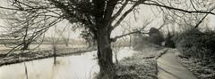 Sun behind the tree (carwyn2) Tags: bw print salisbury shen contact wiltshire ilford fp4 largeformat hao schneider pyrocat 4x10 angulon wylye 121mm ansco130 lodima
