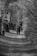 Together (Segfault79) Tags: trees blackandwhite bw parco alberi garden path bn lovers sentiero parc bnw biancoenero giardino innamorati