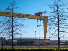 wood and steel (D-j-L) Tags: trees sky canon day unitedkingdom crane steel belfast gb northernireland s100 harlandandwolff titanicquarter