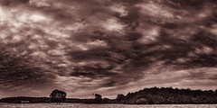 Se Himlen Sepia-7 (Key.in.a.Can) Tags: autumn trees panorama monochrome field sepia clouds forest skyscape landscape denmark textures copper danmark cloudscape odense fyn funen nikond3100