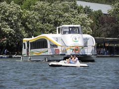 Herstru Lake, Bucharest (cod_gabriel) Tags: park lake lac romania bucharest par bucuresti herastrau bukarest roumanie boekarest bucarest romnia bucureti hidrobicicleta herstru bucareste laculherastrau laculherstru hidrobiciclet