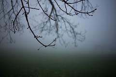 tree, mist & waterdrops (Toni_V) Tags: leica mist tree rain fog schweiz switzerland europe dof nebel suisse bokeh zurich rangefinder mp zrich svizzera 2016 svizra summiluxm leicam 35mmf14asph digitalrangefinder 35lux messsucher gibswil 160418 35mmf14asphfle type240 typ240 toniv m2404404
