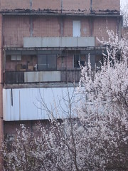IMG_4066 (Souls_Eater) Tags: trees windows sky building speed cherry evening spring walk ukraine wires apricot everydaylife donetsk