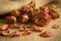 99/366: Decaying beauty...14/52 (judi may) Tags: roses stilllife texture petals dof bokeh deadflowers driedflowers driedroses hessian deadroses tabletopphotography project52 canon7d day99366 366the2016edition 3662016 8apr16 chestersroses gettingmileageoutofmyprops april2016amonthin30pictures