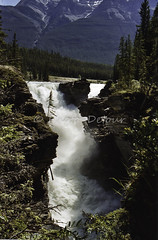 J-500604-0046 (Mireille & Jacky Weiland Photography) Tags: canada montagne nationalpark jasper continental rivire alberta pays paysages rocheuses chutes athabasca sunwapta