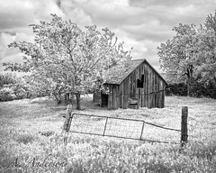 Old Barn - infrared (A Anderson Photography, over 1 million views) Tags: barn canon gate infrared