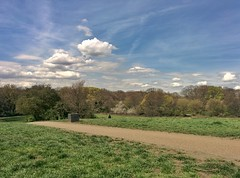 Pleasant Afternoon (Climate_Stillz) Tags: green sunshine relax afternoon relaxing bluesky greenery resting hampsteadheath parliamenthill cloudscape pleasant puffyclouds nexus5