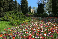 The Hermitage (annalisabianchetti) Tags: park flowers italy spring tulip hermitage valeggio eremo parcosigurt