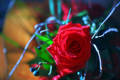 Dressed in red (petrapetruta) Tags: red colors rose bokeh spinning sonya7
