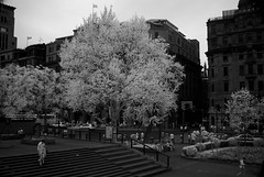 DSC01323 (zkj102) Tags: city tree rain ir 3d cityscape shanghai stereo infrared    htconex