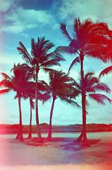 (Levi Mandel (@levimandel)) Tags: light color film 35mm cool florida miami magic hologram scan palmtrees breeze expired holographic
