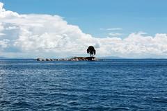 Lago Titicaca (Chicha Bachicha) Tags: blue lake tree titicaca beautiful island little bolivia lagotiticaca