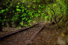 () Tags: green nature canon taiwan greeneyes   firefly     hualian summernight 4                   b    ef135mmf2lusm      m       canon5dmarkii           taiwanhualienature