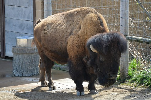 Henry Vilas Zoo, Madison, Wisconsin.       DSC_6317