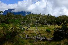 Plaine des Tamarins (frost242) Tags: landscape run paysage arbre runion tamarin tronc mafate tamarins troncs ocanindien plainedestamarins x100t