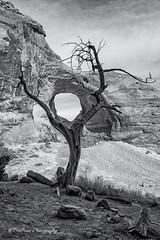 Ear of the Wind (B/W) (TreeRose Photography) Tags: light shadow arizona sky southwest tree texture clouds landscape dead utah scenery rocks arch hole patterns limbs framing monumentvalley earofthewind