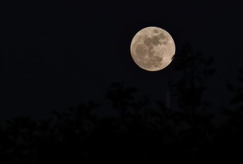 Bella Luna de Nochebuena/Beautiful Christmas Eve Moon.