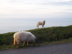 sheep-on-coast_IMG_4881 (Roger Brown (General)) Tags: park two england cliff west castle cars feet water rooms village martin dinosaur tea wildlife cottage railway east using gravity devon edge rivers works gorge below connected northern 700 lyn lynmouth tanks confluence attractions dunster visited watersmeet exmoor combe lynton cableconnected