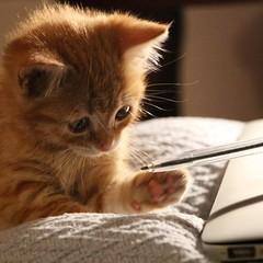 kitties are cuter in Cuenca Ecuador (Graygeek2015) Tags: curry gato gatita