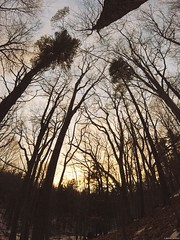 Sunset (mgestewitz) Tags: trees sunset sun abstract color art nature silhouette forest outside photography woods warm bright newhampshire nh tones gopro