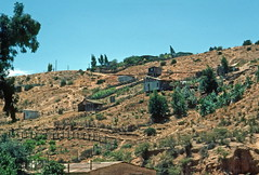 Poor housing beside railway track, Paso Hondo (1991) (Duncan_and_Gladys) Tags: chile cl quilpue valparaisoregionv