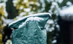 First Layer of  Winter Snow(Olympus OMD EM5II & mZuiko 40-150mm f2.8 Pro) (LR6 Edited) (markdbaynham) Tags: winter snow evil olympus telephoto zuiko f28 omd csc mz m43 zd mft 40150mm mirrorless micro43 microfourthirds micro43rd mzuiko m43rd em5ii