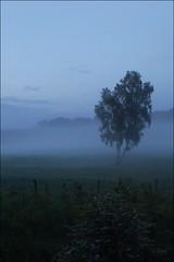Dans la brume 2... (sophie.lamidiaux) Tags: bleu ciel nuage paysage arbre couleur brume