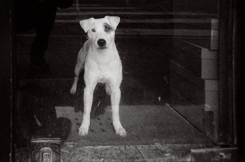 Watcher.