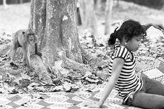 Sneaky Monkey stalking on young girl selling bananas (kitsunekuma) Tags: travel blackandwhite bw girl monkey blackwhite cambodia young bananas siem reap angkor wat sneaky travelphotography canon85mmf18usm canon100d