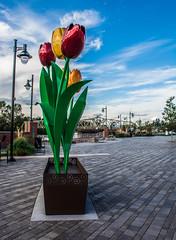 """Tulip Dance"" sculpture in Skagit Riverwalk Park ( Peterson Photogr@phy) Tags: sculpture washington unitedstates tulips washingtonstate mountvernon riverwalk skagitcounty skagitriver stateofwashington thetulipdance nikond5200 tulipdance skagitriverwalk nikonafs18140mmf3556edvr skagitriverwalkpark tulipdancesculpture"