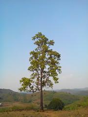 Old age (kavya c) Tags: alone village solitary takk visakhapatnam lakshmipuram