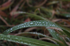 Rugiada (Berry_92) Tags: winter green nature water rain drops dew gras rugiada gocce