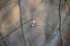 03. Leaf (Misty Garrick) Tags: fortsnelling fortsnellingstatepark