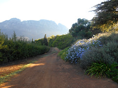 Road to the Simonsberg (RobW_) Tags: africa morning wednesday march walk south hydro western cape stellenbosch 2016 02mar2016