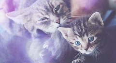 little Baby <3 (Rose*aime*OH! i'm late with all my comments sorry) Tags: baby cute cat chat sweet adorable kitty straycat