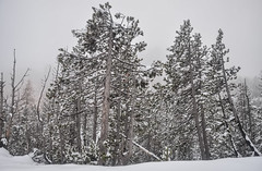 Fuorn Pass (ccr_358) Tags: autumn trees panorama snow alps fall alberi clouds landscape schweiz switzerland nikon october scenery day view suisse cloudy postcard neve svizzera autunno alpi ontheroad engadin ch cartolina swissalps engadina ottobre 2015 graubnden grisons mnstertal parcnaziunalsvizzer ofenpass confoederatiohelvetica grigioni valmstair grischun passdalfuorn swissconfederation d5000 passodelforno ccr358 fuornpass nikond5000 valmonastero