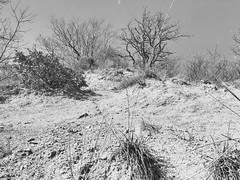 Dry nature (momentsinshadow) Tags: trees blackandwhite bw nature sand dry arid