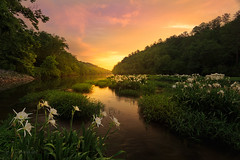 Bathed in Golden Hour - 1055 (J & W Photography) Tags: morning trees mist reflection nature fog clouds creek landscape dawn stream waterlily lilies thunderstorm exposureblending cahabariver jwphotography cahabawaterlilies hargroveshoalwaterlilies