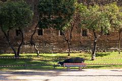 relax in corso (sga77) Tags: park orange rome roma primavera relax spring workinprogress riposo giardinodegliaranci arance strisce