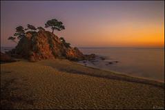 Sunset (antoniocamero21) Tags: color marina atardecer agua rboles foto sony girona cap cielo catalunya pinos rocas platja daro roig