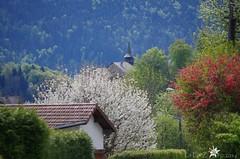 Eglise de Chtillon-sur-Cluses (La FoeZ') Tags: spring april avril printemps eglise hautesavoie 2016 chtillonsurcluses pentaxk30 lafozo