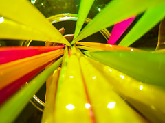 Party Time (AngelBeil) Tags: party color cup glass fun lookup straws partytime feista gopro putyourgoproineverything