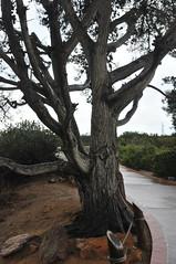 Cabrillo National Monument (sobca) Tags: sandiego pacificocean coronado tidepool pointloma cabrillonationalmonument navalbase northislandnavalairstation
