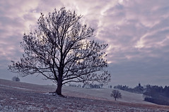 Happy Tree-mendous Tuesday! :) (Paulina_77) Tags: world pink blue trees winter light wild sky white snow tree nature field silhouette clouds landscape countryside woods nikon scenery poetry frost mood moody quiet peace village view purple cloudy outdoor snowy country scenic restful calming peaceful atmosphere scene monotone poetic calm covered serenity blanket czechrepublic dreamy chilly serene snowing sight nikkor snowfall wonderland tones picturesque chill tranquil atmospheric coolness soothing muted winterscape 18105 whiteness coldness wintry d90 18105mm nikond90 nikkor18105mm 18105mmf3556 nikkor18105mmf3556 pola77