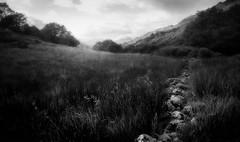 The Lost Valley (David Haughton) Tags: wild blackandwhite black monochrome grass mono scotland scottish fields wilderness drystonewall lochlomond longgrass
