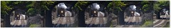 6-611HeadedToLynchburgStation (T's PL) Tags: virginia nikon nw smoke va tamron 611 steamlocomotive nikondslr lynchburgva nw611 d7000 nikontamron nikond7000 tamron16300mmf3563diiivcpzdmacro tamron16300mm nwclassjlocomotive nwclassjlocomotive611 nwlocomotive611 tamron16300mmf3563diiivcpzdmacrob016